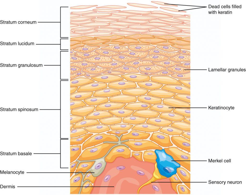produk untuk kulit berjerawat